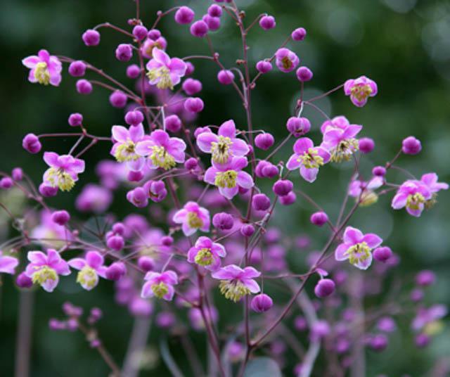 73967 The lunar calendar of gardening for December, 2020