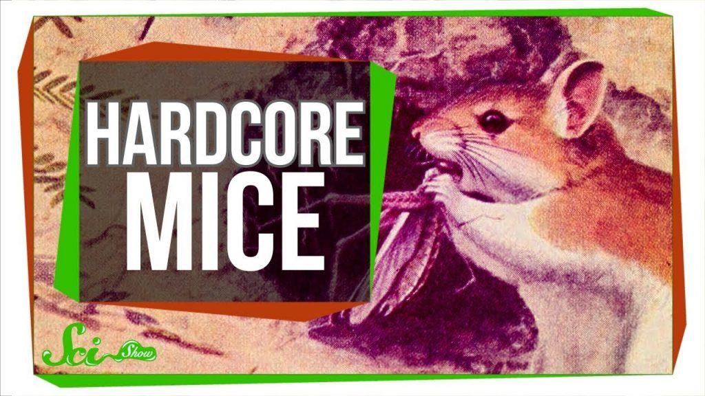 74231 Hardcore Mice use Scorpion Venom as a Painkiller