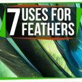 74545 7 Wacky Ways Birds Use Feathers