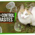 74579 How Mind-Controlling Parasites Teach Us About Brains