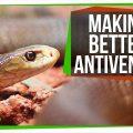74459 Making Antivenom out of Human Antibodies | SciShow News
