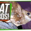 74597 Meet the Oilbird: A Bird that Thinks it's a Bat