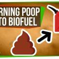 74807 Purple Bacteria: Turning Poop Into Biofuel