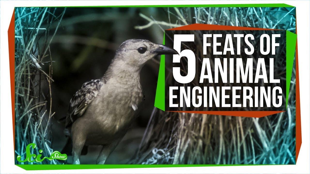 75499 5 Amazing Feats of Animal Engineering
