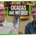 77505 Cicada Symbiosis | SciShow Talk Show