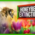 78122 What Would Happen if Honeybees Went Extinct?