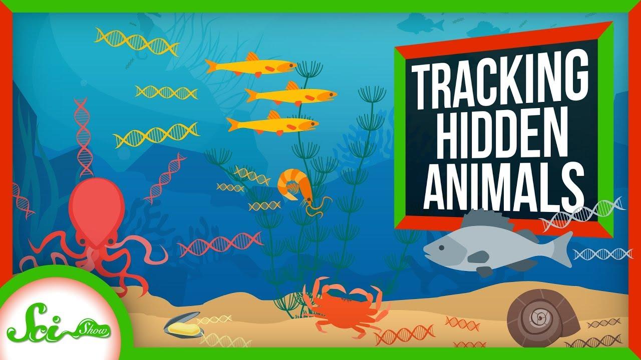 79832 eDNA: How Scientists See Hidden Animals