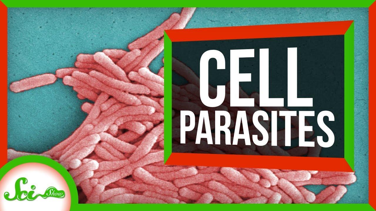 81174 6 Parasites That Live INSIDE Cells