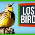 81741 North America's 3 Billion Lost Birds | SciShow News