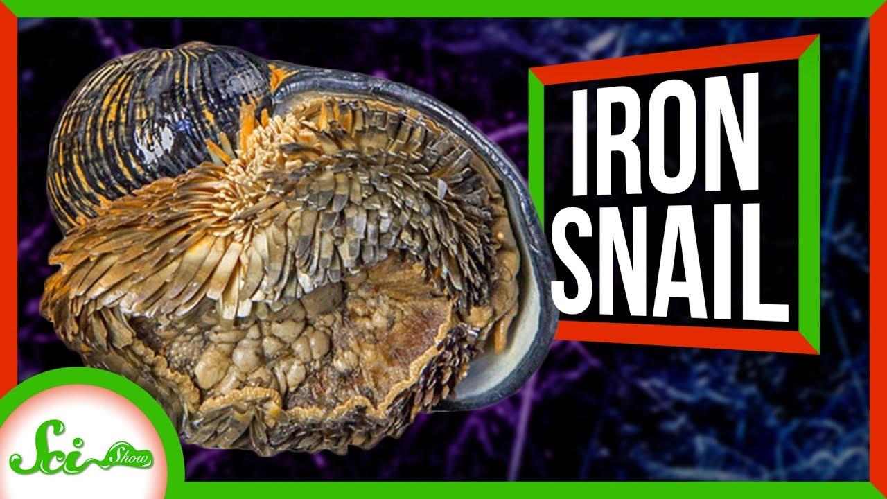81593 The Deep-Sea Snail with an Iron Shell