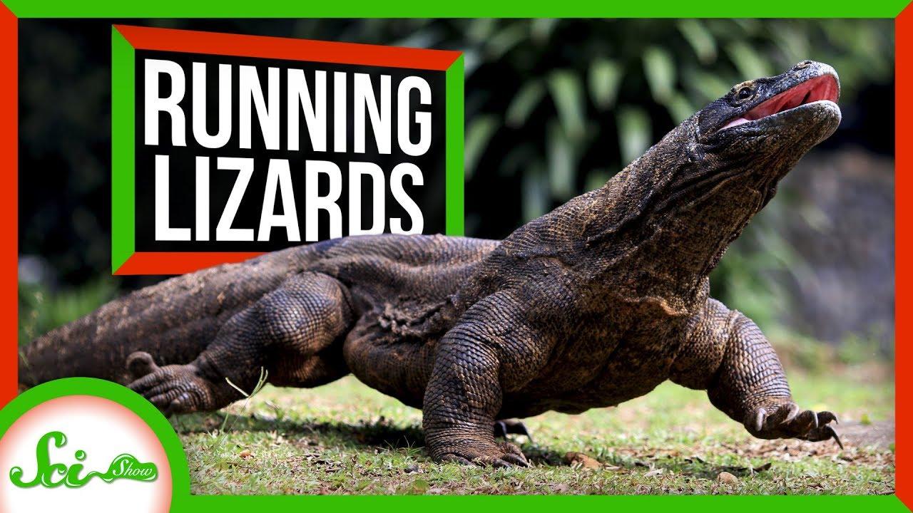 81270 Why Lizards Don't Run Marathons