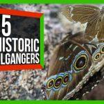 88503 This Sturgeon-Paddlefish Hybrid Shouldn't Exist | SciShow News