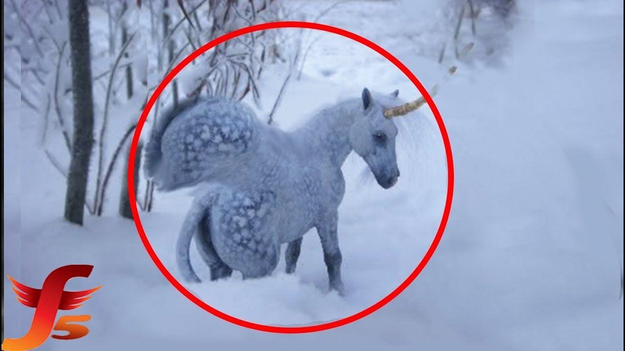 90248 7 Real-Life Unicorns