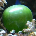 91221 Technicolor Dream Fish: How Tilefish Flash
