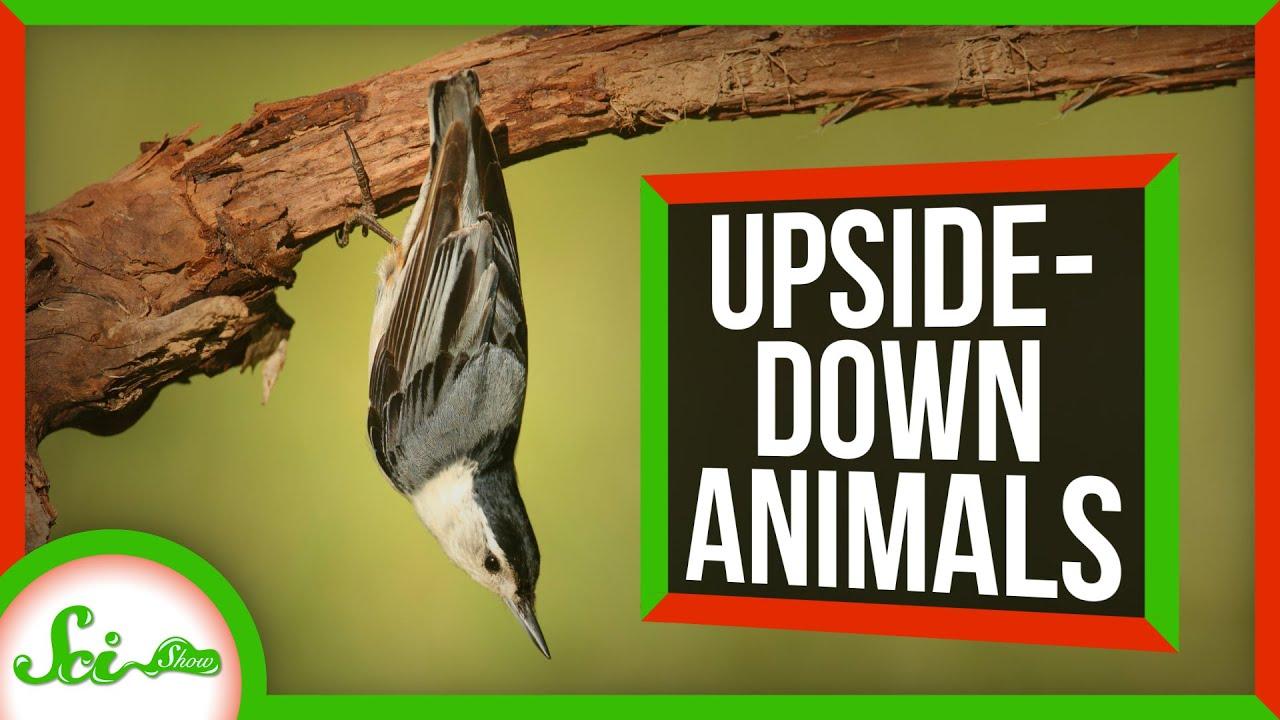 93281 6 Animals That Thrive Upside-Down