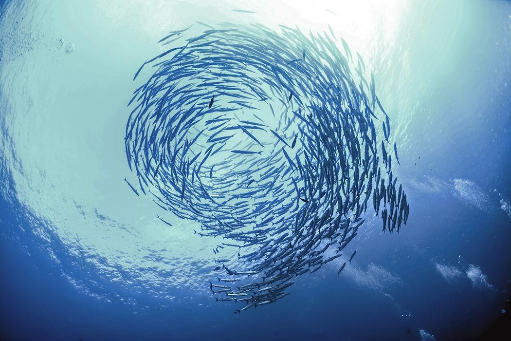 93259 Why Do Fish School?