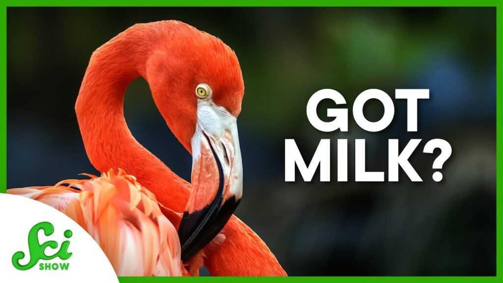 "96447 6 Animals That Aren't Mammals and Produce ""Milk"""