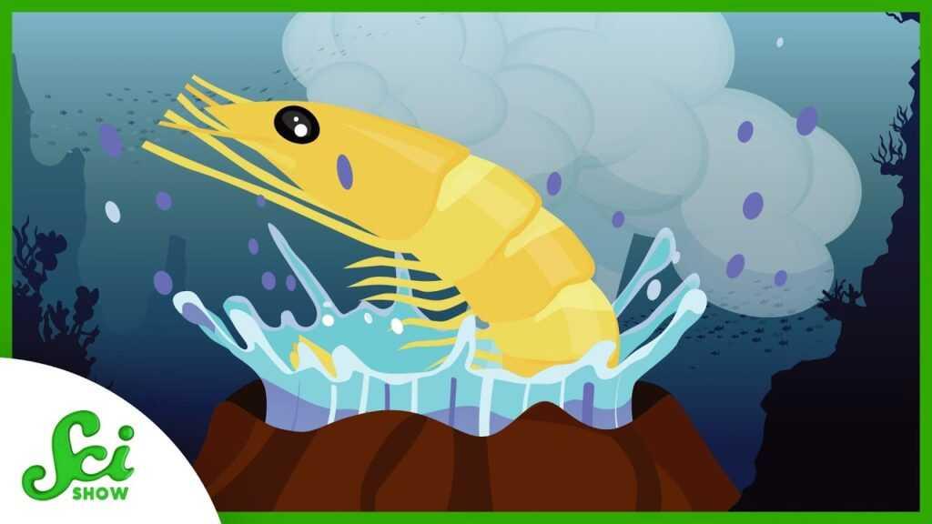 96491 These Shrimp Love a Good Boil